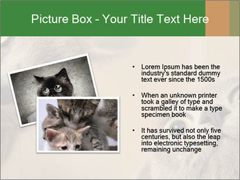 0000082312 PowerPoint Templates - Slide 20