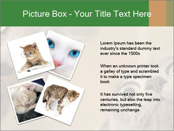0000082312 PowerPoint Templates - Slide 23
