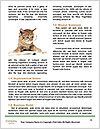 0000082312 Word Template - Page 4