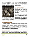 0000082334 Word Template - Page 4