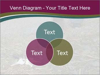 0000082356 PowerPoint Template - Slide 33