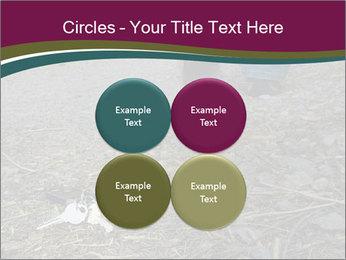 0000082356 PowerPoint Template - Slide 38