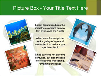 0000082378 PowerPoint Templates - Slide 24