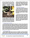 0000082383 Word Templates - Page 4