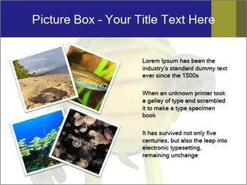 0000082384 PowerPoint Template - Slide 23