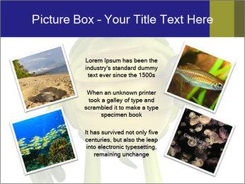 0000082384 PowerPoint Template - Slide 24