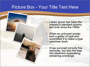 0000082414 PowerPoint Templates - Slide 17