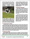 0000082439 Word Templates - Page 4