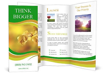 0000082486 Brochure Template