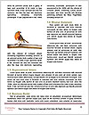 0000082513 Word Templates - Page 4