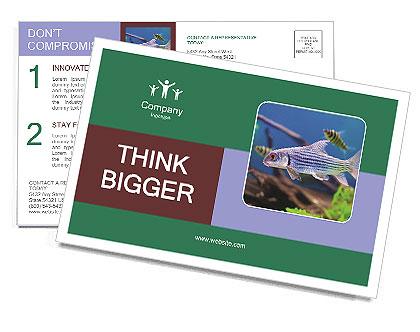 0000082523 Postcard Templates