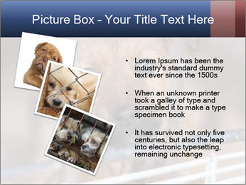0000082582 PowerPoint Templates - Slide 17