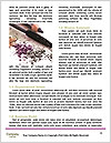 0000082615 Word Templates - Page 4