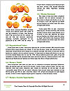 0000082616 Word Templates - Page 4