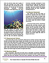 0000082644 Word Templates - Page 4