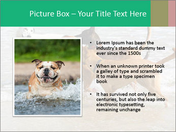 0000082649 PowerPoint Templates - Slide 13
