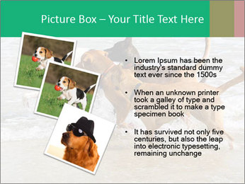 0000082649 PowerPoint Templates - Slide 17