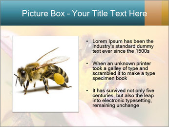 0000082676 PowerPoint Template - Slide 13