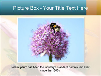 0000082676 PowerPoint Template - Slide 16