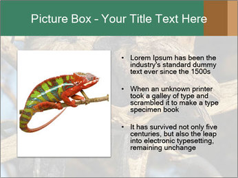 0000082721 PowerPoint Template - Slide 13