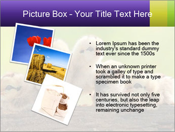 0000082735 PowerPoint Templates - Slide 17