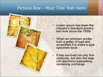 0000082751 PowerPoint Templates - Slide 17