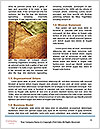 0000082751 Word Template - Page 4