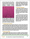 0000082832 Word Templates - Page 4
