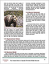 0000082844 Word Template - Page 4