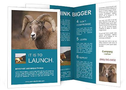 0000082871 Brochure Template