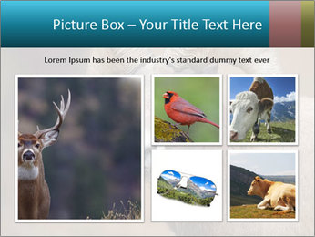 0000082871 PowerPoint Template - Slide 19
