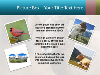 0000082871 PowerPoint Template - Slide 24