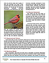 0000082871 Word Templates - Page 4