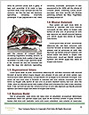 0000082877 Word Template - Page 4