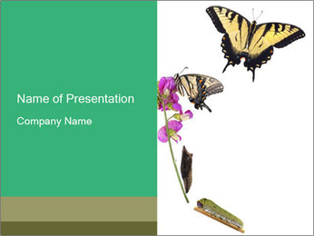 0000082910 PowerPoint Templates - Slide 1