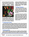 0000082923 Word Template - Page 4