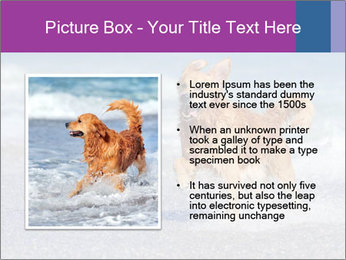 0000082930 PowerPoint Template - Slide 13