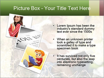 0000082941 PowerPoint Template - Slide 17