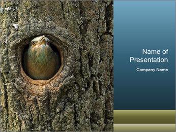 0000082976 PowerPoint Templates - Slide 1