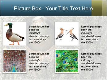 0000082976 PowerPoint Templates - Slide 14