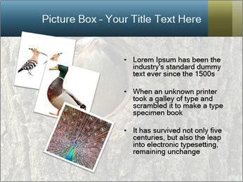 0000082976 PowerPoint Templates - Slide 17