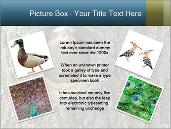 0000082976 PowerPoint Templates - Slide 24