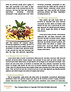 0000083006 Word Templates - Page 4