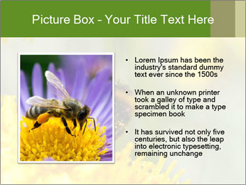 0000083013 PowerPoint Template - Slide 13