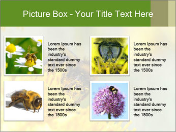 0000083013 PowerPoint Template - Slide 14