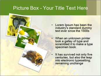 0000083013 PowerPoint Template - Slide 17