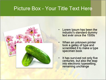 0000083013 PowerPoint Template - Slide 20