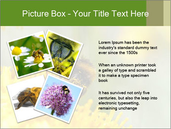 0000083013 PowerPoint Template - Slide 23