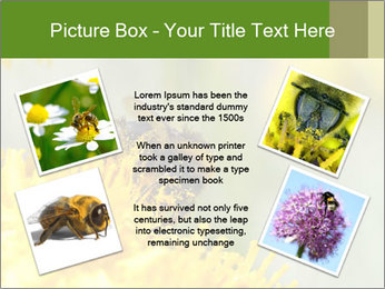 0000083013 PowerPoint Template - Slide 24