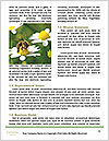 0000083013 Word Template - Page 4